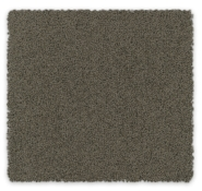 Cut Pile Twist Carpet Bailey Feltex