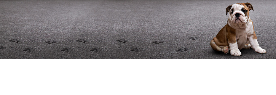 Carpet Ratings - ACCS Star Rating Carpets
